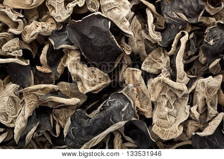 Closeup of lots of dried black fungus