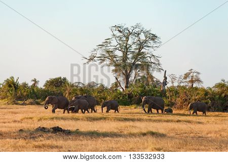 Large group of elephants shot in Amboseli park Kenya