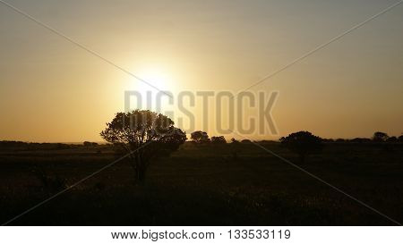 Sunset over a landscape in South Africa, foreground individual trees, dusk