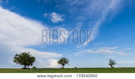 Three trees on a hill with grass in Piedmont in Italy with blue sky.