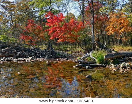 Woodsy River In Autumn