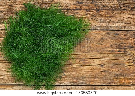 bunch of fennel on a wooden table background