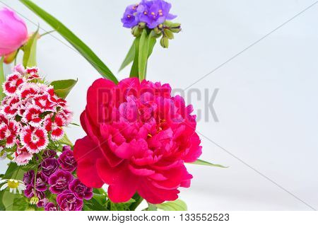 Background with flowers - peonies, carnations, delphinium, daisy