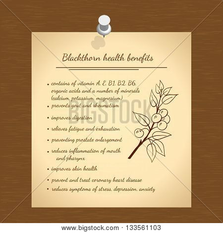 Illustration hand drawn blackthorn. Health benefits information. Medicinal plant. Vector illustration