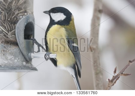 a great tit sitting onna bird feeder