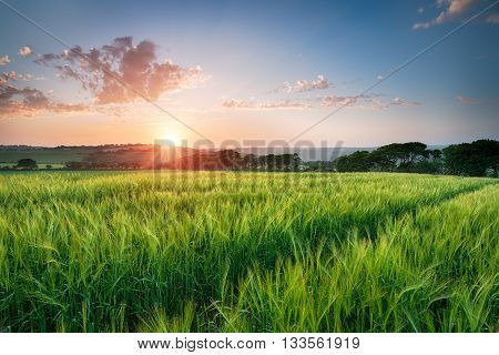 Beautiful Sunset Over Fields Of Barley