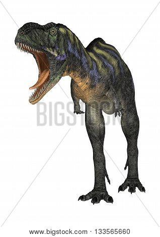 3D Rendering Dinosaur Aucasaurus On White