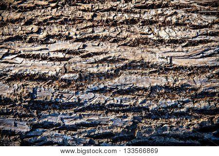Dark fir bark texture. Fir bark background.