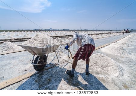 Worker harvesting sea salt by scooping piles of sea salt up to the wheelbarrow.