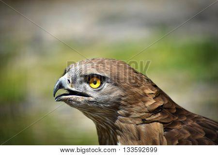 Eagle, foto hecha con una Nikon D7200.