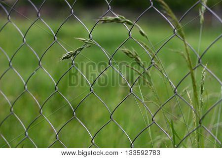 Deatil on chain-link fence with meadow plants