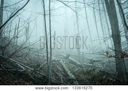fallen and broken by storm trees in forest in Carpathian mountains