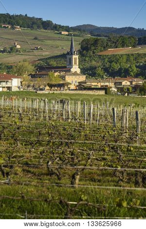 Village of Denice with vineyards, Beaujolais in France