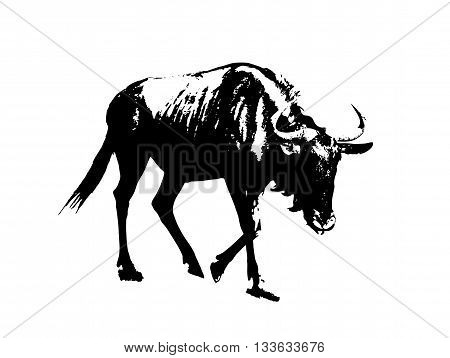 Blue wildebeest - Connochaetes taurinus. Black and white vector graphic. Antelope in picture. Animal scene.