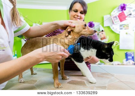 Cat and dog together at vet or pet hairdresser