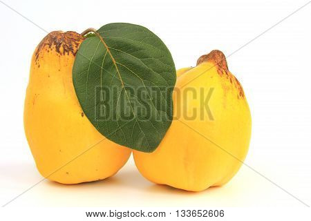 Ripe quince fruit isolated against white background (Cydonia oblonga)
