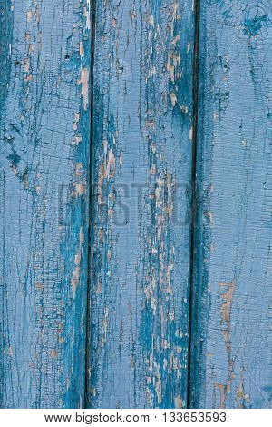 Old Shabby Wooden Planks with cracked color blue paint