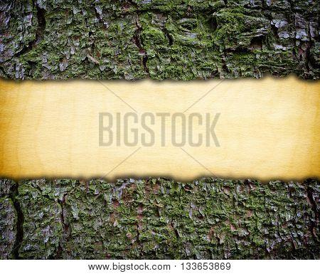 Wooden frame made of green bark, background,