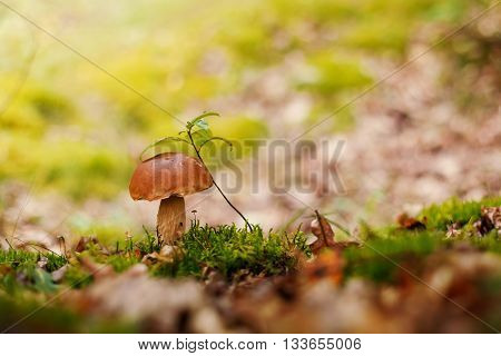 Brown mushroom with green leave in the forest clostup
