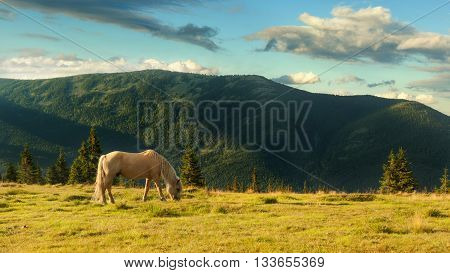 Summer landscape in Carpathian mountains and the blue sky with clouds. A hors grazes in a meadow in the mountains