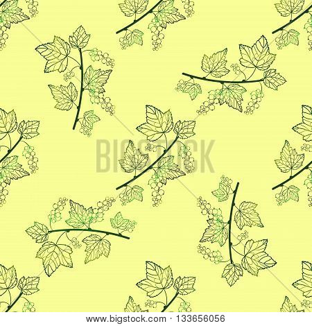 Tender currant seamless pattern. Vector currant background. Seamless pattern with contour hand draw graphic currantberries. Vector berries template.