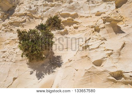 Sharp edges of a sandstone hill enlightened by sun. Several bushes.