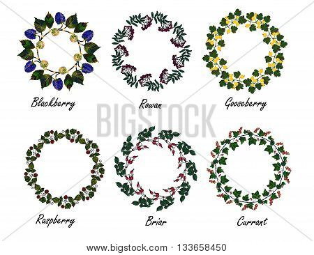 Set of berry frames - wreath. Currant , blackberry, raspberry, rowan berries and leaves. Vector isolated objects on white background. Round frame collection  of garden berries.