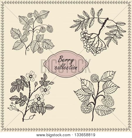 Collection of hand drawn berries isolated on gentle background. raspberry, rowan, rose hip  - briar, blackberry