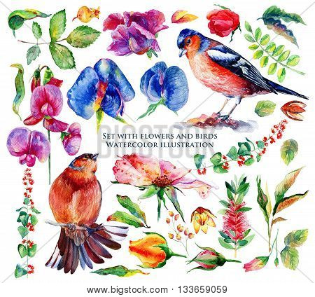 Set of different flowers, leaves and birds for design.  Watercolor roses chaffinch Sweet pea wild rose berries branches and twigs. Set of floral elements to create compositions.