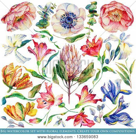 Set of different flowers and leaves for design. Watercolor iris tulip anemone; poppy Alstroemeria; Proteus. Set of floral elements to create compositions.