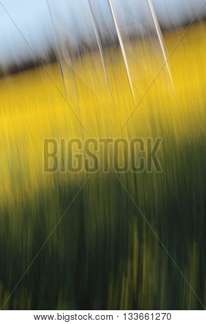 Canola Field Shot in a Blurred Motion Picture, unfocused parts of electricity tower visible.