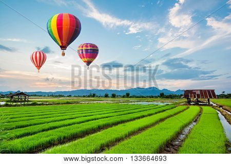 Hot-air balloons flying over fresh rice field on beautiful sunset.