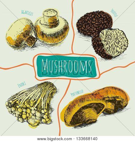 Vector mushrooms colorful set 1. Illustrative colorful sorts of mushrooms