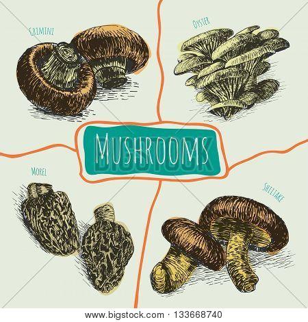 Vector mushrooms colorful set 3. Illustrative colorful sorts of mushrooms