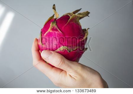 Woman`s hand holding exotic dragon fruit (Hylocereus monacanthus Pitahaya Pitaya) isolated on grey textured background. Bright red violet skinned fruit with violet flesh. Artistic retouching.