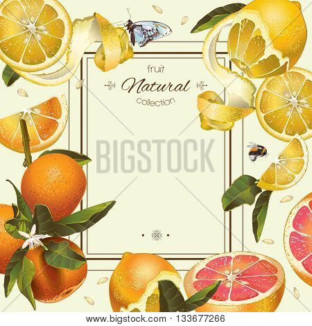 Vector vintage citrus frame with lemon, hibiscus and rose hip.