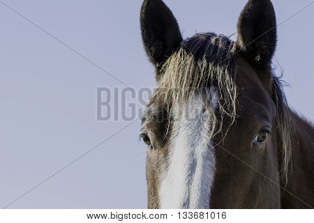 Eyes and ears of a horse's head with blank blue sky to the left