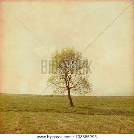 Lonely tree in the field in grunge and retro style.