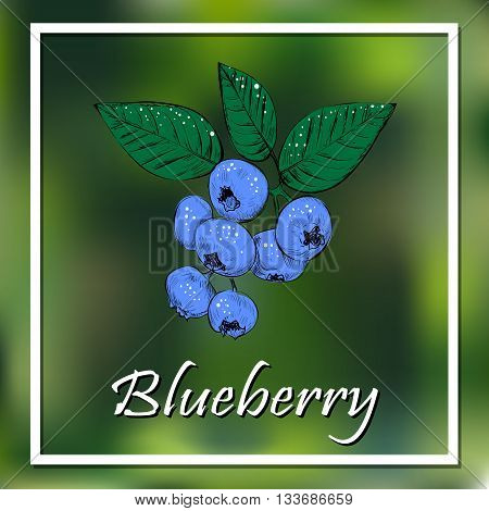 Blueberries vector illustration. Berry poster banner. eps10