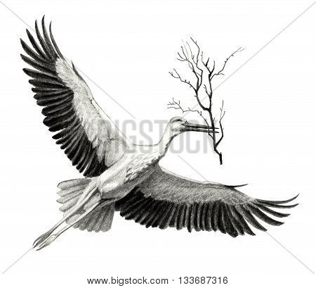 flying stork with a branch in its beak. Pencil sketch of detailed