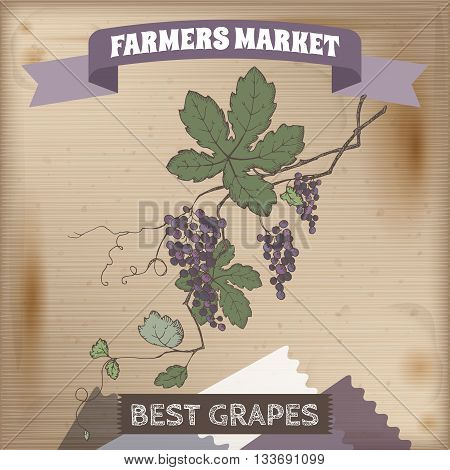 Farmer market label with grapevine color sketch. Placed on original wooden texture. Includes hand drawn elements.