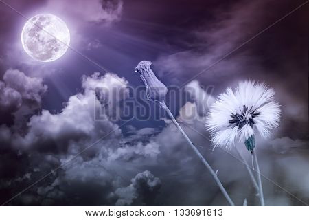Attractive photo of flowers with full moon and moonlight in nightly sky. Beautiful nature use as a great background. Vintage tone. The moon taken with my own camera no NASA images used.