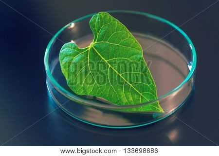 Research of plant photosynthesis in the laboratory