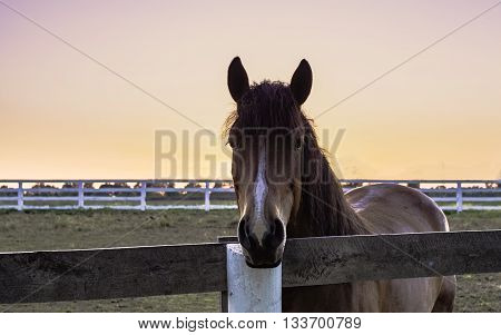 Horse standing in a paddock behind a fence with a golden sunset in the background