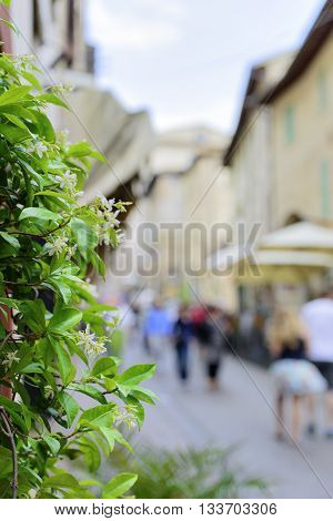 Flower With Blurred Houses And People