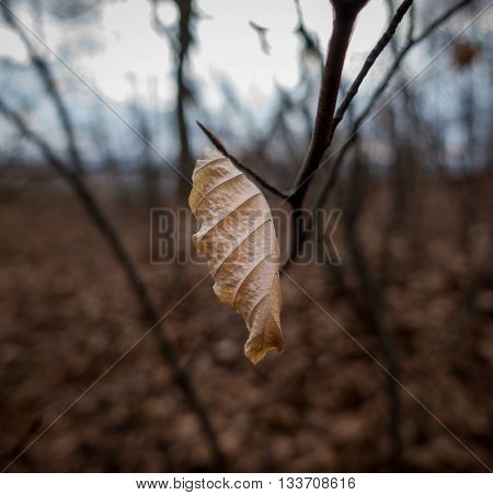 Autumn dry leaf in the forest .