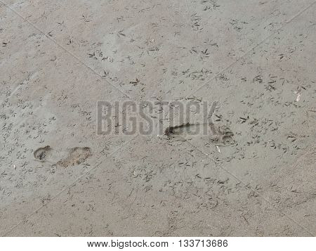footprints and  traces of birds in the wet sand