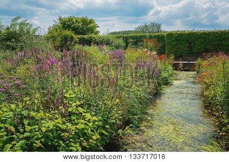 Overgrown decorative pond in the garden surrounded by flowering plants.