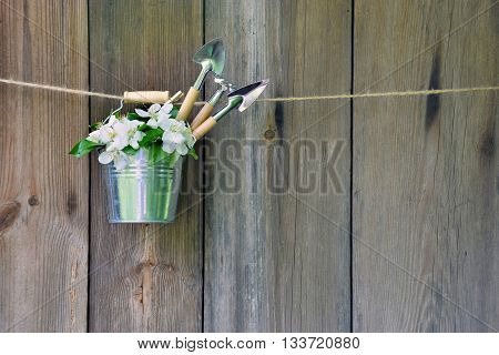 Bouquet of apple blossom in a decorative bucket and garden tools. Gardening. Hobby. Spring. The beauty and fragrance of spring. Composition on the old wooden background. Spring work. Rustic style.