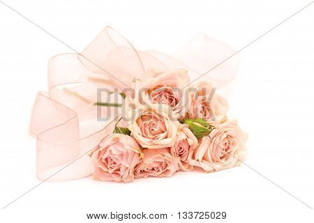 delicate pink roses and ribbons on white background